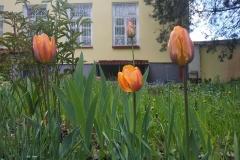 qopIShC_zKQflowers