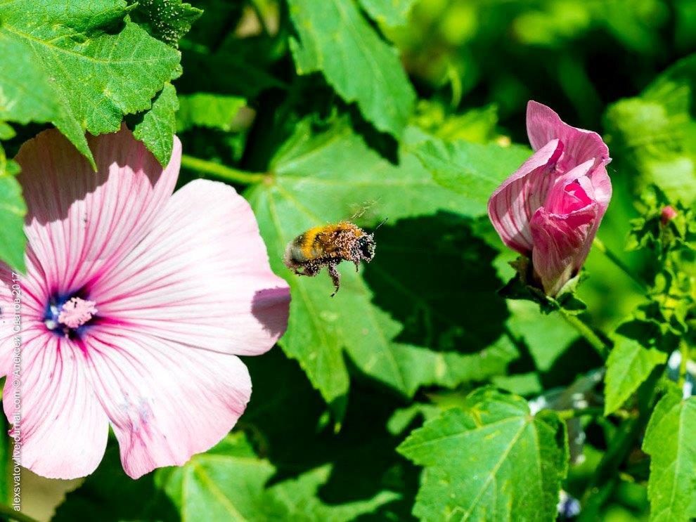 И.А. Бунин. «И цветы, и шмели, и трава, и колосья»