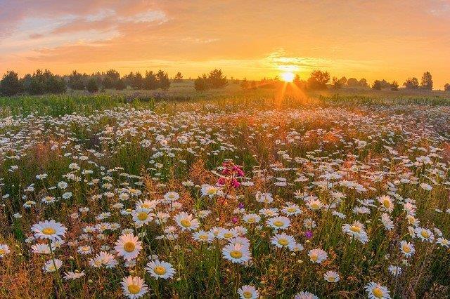 К 150-летию со дня рождения И.А. Бунина. «Божественное великолепие мира.»