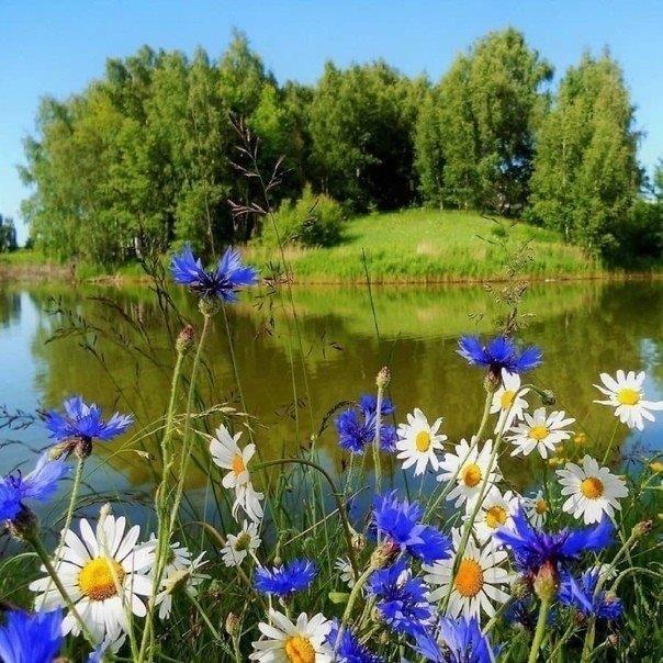 К 150-летию со дня рождения И.А. Бунина. « Ты раскрой мне, природа, объятия». Лирик в прозе.