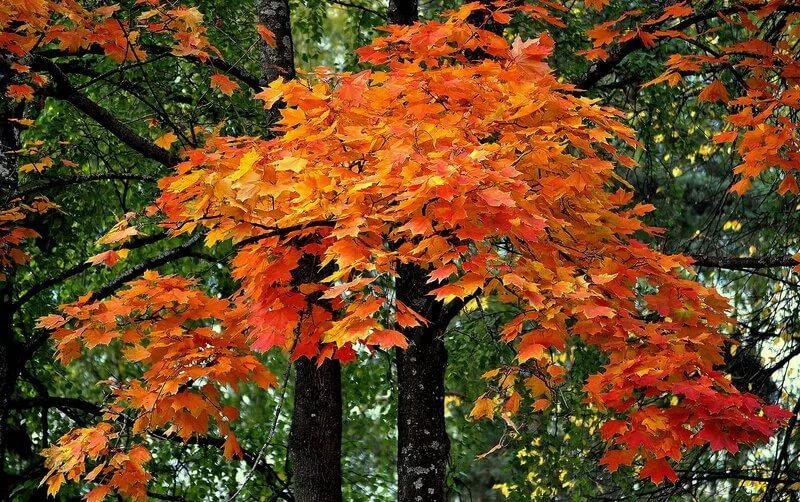 К 150-летию со дня рождения И.А. Бунина  Цикл «Ты раскрой мне, природа, объятие»  Бунинская осень.