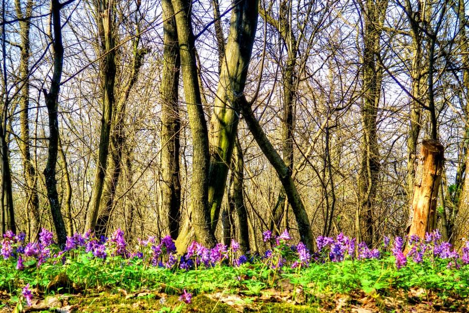 Путешествие по весне (ч.5).